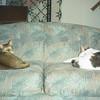 03/96 Cats snoozing