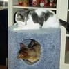 12/96 Cats enjoying their present