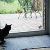 09 1998 Bielka watching the chipmunk