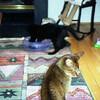 12 1998 Good kitties share