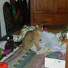 12 2001 Christmas<br /> Bielka among the rubble