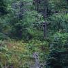 06/1993 Pikes Peak cog train <br /> See the bear?