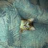 10/1994 Silly kitten