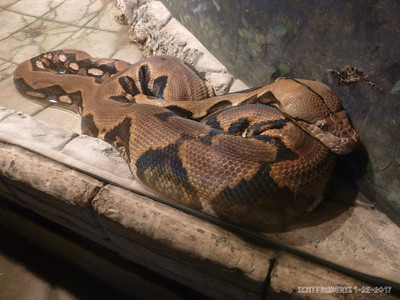 The Reticulated Python, generally speaking, is the worlds longest snake. On record, one was once found that was 33 feet long. The females can lay up to 100 eggs at a time...