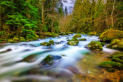 """Smooth Move,"" Rock Creek, Gifford Pinchot National Forest, Washington"