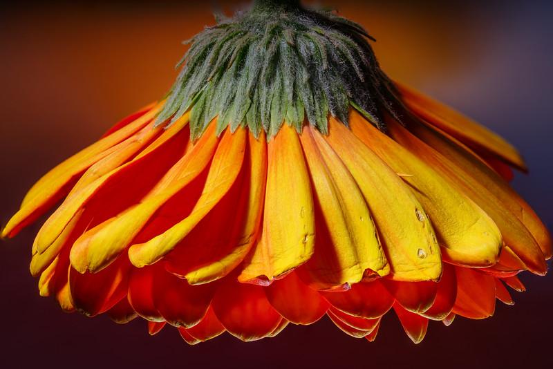 Upside-Down Flower
