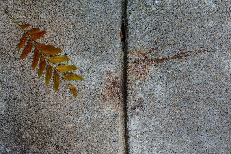 Leaf No. 4