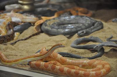 Indie's Snakes 7/12