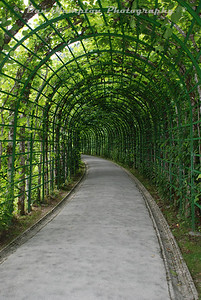 Tunnel of...