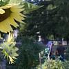 Sundial Garden, Fitchburg