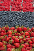 "Fresh, organically grown berries - raspberries, blueberries, and strawberries.  (To purchase prints or downloads, click on the ""Buy"" or shopping cart button above the image.)"