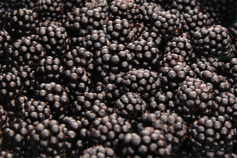 "Close-up of fresh, organically grown blackberries.  (To purchase prints or downloads, click on the ""Buy"" or shopping cart button above the image.)"