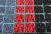 "Fresh, organically grown berries - blueberries, raspberries, and blackberries.  (To purchase prints or downloads, click on the ""Buy"" or shopping cart button above the image.)"