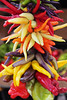 """Colorful hanging chili pepper assortment.  (To purchase prints or downloads, click on the """"Buy"""" or shopping cart button above the image.)"""