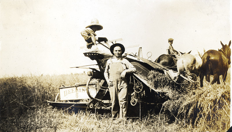 Harvesting on the John Paulk farm near Alapaha about 1920. This series of photographs documents the farming process in Berrien County about 1920