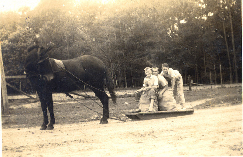 Mule sled pulling sacks of sweet potatoes on the Owen Griffin farm on Flat Creek, 1940. Left to right: W. E. Griffin, Horace Griffin, and Max Devane