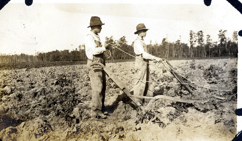 Turning the soil on the John Paulk farm near Alapaha about 1920. This series of photographs documents the farming process in Berrien County about 1920