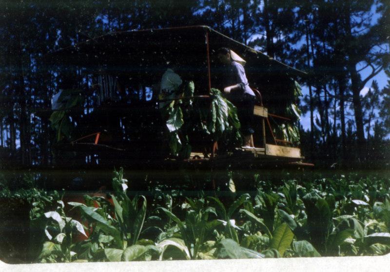 Tobacco Harvester 6-12-57