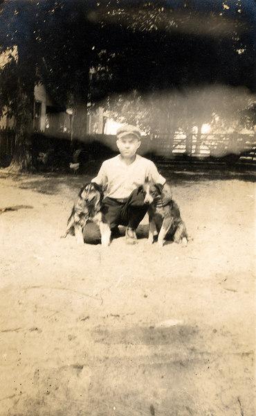 Farm dogs on the John Paulk farm about 1920