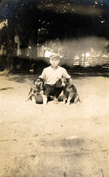 Farm dogs on the John Paulk farm about 1920