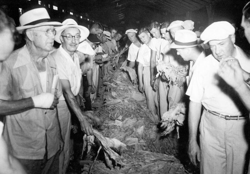 Tobacco Auction, circa 1951.  On left Robert (Bob) Dale, Man with bandage on hand is Simmie King. (Information courtesy of Rhonda D. King)