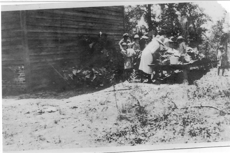 Stringing Tobacco near Alapaha about 1920s G021b