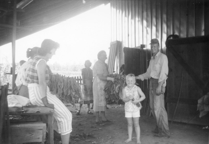 Stringing tobacco on the W. E. Griffin farm 1958. Identified from right: W. E. Griffin and his daughter Karen Griffin.