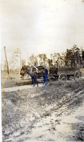 Returning an empty wagon home to the John Paulk farm near Alapaha about 1920. This series of photographs documents the farming process in Berrien County about 1920