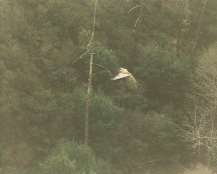 THE SEARCH FOR FLIGHT 706 - AUGUST 1986<br /> <br /> This was my first view of the Air West DC-9 wreckage when I discovered the tail section in 1986 during some low passes through Fish Canyon. <br /> <br /> Initially I thought I had found the main impact site, but I would later learn some ten years later that the tail section was deposited in this canyon nearly a quarter mile away after an unsuccessful attempt to sling load it from the crash site.  (LostFlights File Photo)