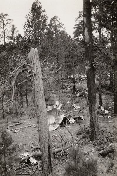 "This photo was taken shortly after searchers discovered the wreckage of the ""City of San Francisco"" The plane was torn apart as it passed through the pine trees. (J.R. Willis Photo)"