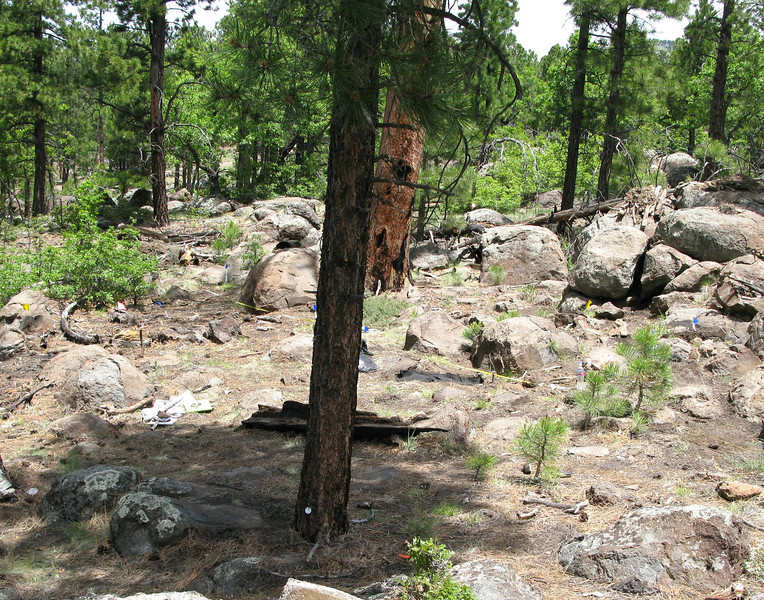 2009 - The same location with very little change during the past eight decades. The small tree is new and has grown in the foreground. However, the large reddish colored pine in the background still stands after many years.