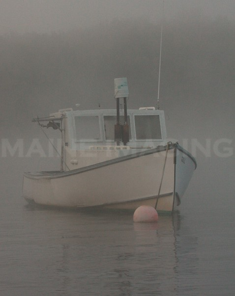 Maine Summer Morning, Kennebec River, Maine