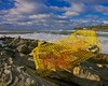 Battered Lobster Trap, Pemaquid Point, Maine
