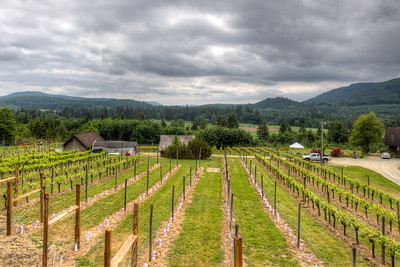 Blue Grouse Estate Winery and Vineyard - Cowichan Valley, Vancouver Island, BC, Canada