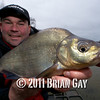 holding a nice bream / big skimmer, Will Raison fishes a small cage feeder with dead maggots and fishmeal for bream. © 2012 Brian Gay