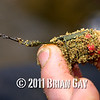 The filled feeder, Will Raison fishes a small cage feeder with dead maggots and fishmeal for bream. © 2012 Brian Gay