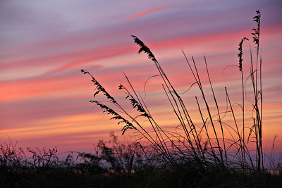 A brilliant sunlight casts seaoats into silhouette at Fort Morgan Alabama, November 2013.