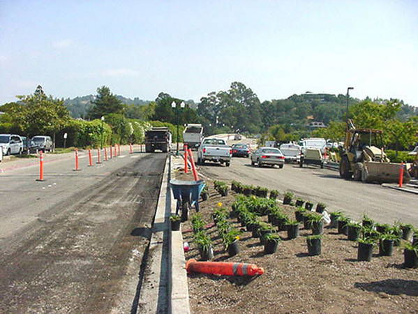 While the road is being resurfaced, new plants are laid out to be planted.