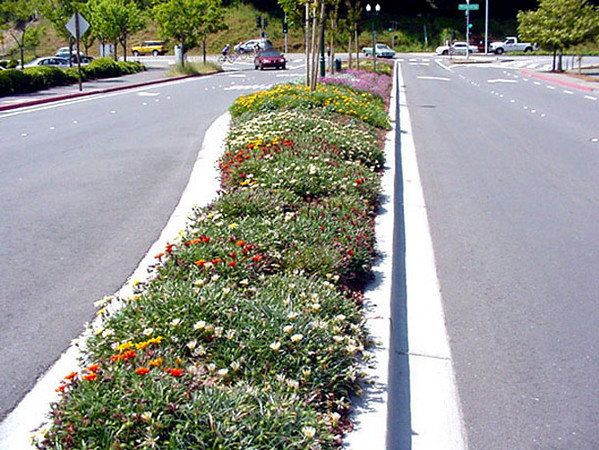 A few months later...filling in colorfully with drought-tolerant, low-growing plants well suited to the heat and challenging roadway conditions.
