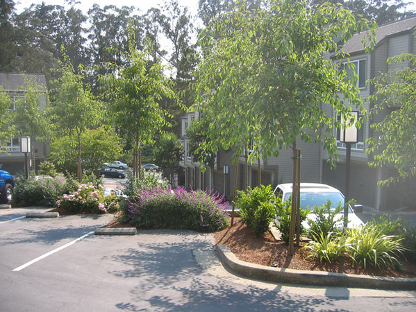 Another view of the trees and flowering plants around the parking area.