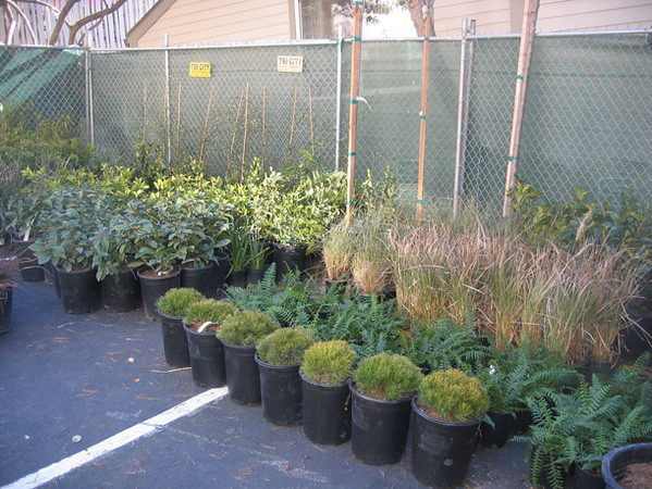 The onsite holding area of container plants waiting to go into the ground around the complex.
