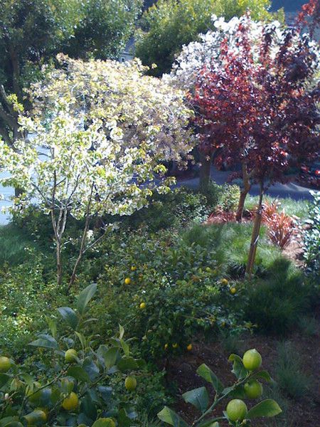 In spring, older and newly planted trees and shrubs provide color and fruit for the neighbors.