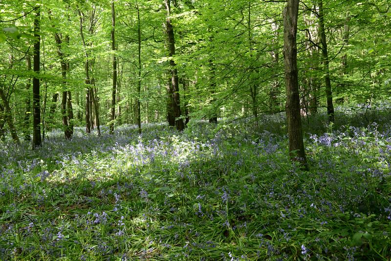 Bluebell Wood walks