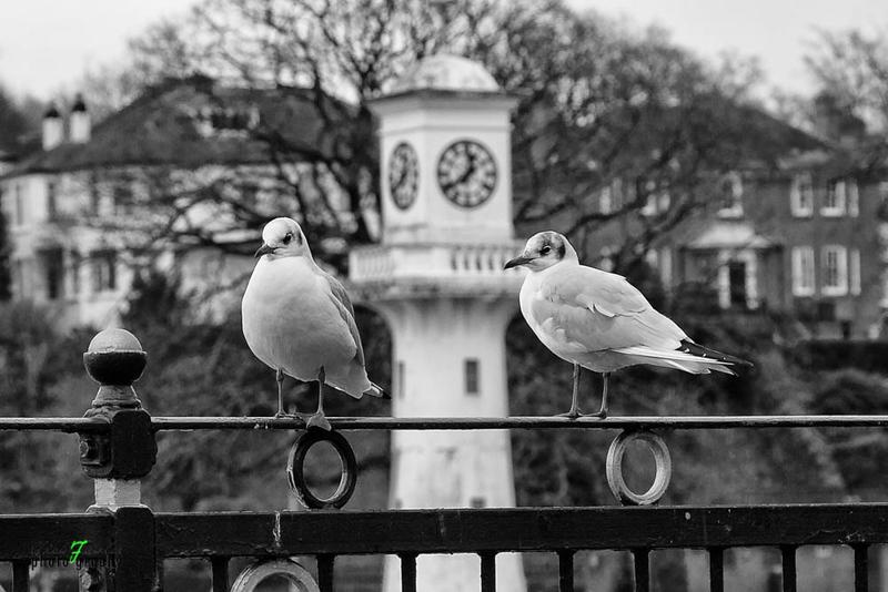 Cardiff Roath Park- 4