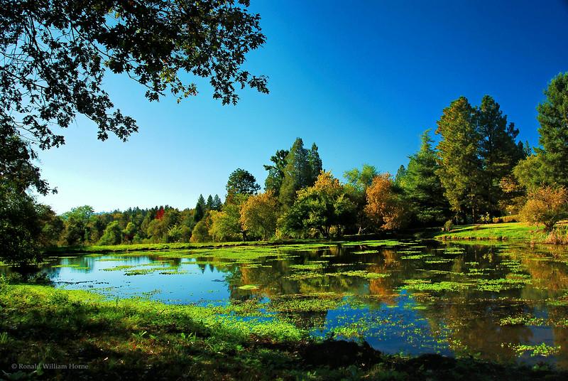 Norlene Pond
