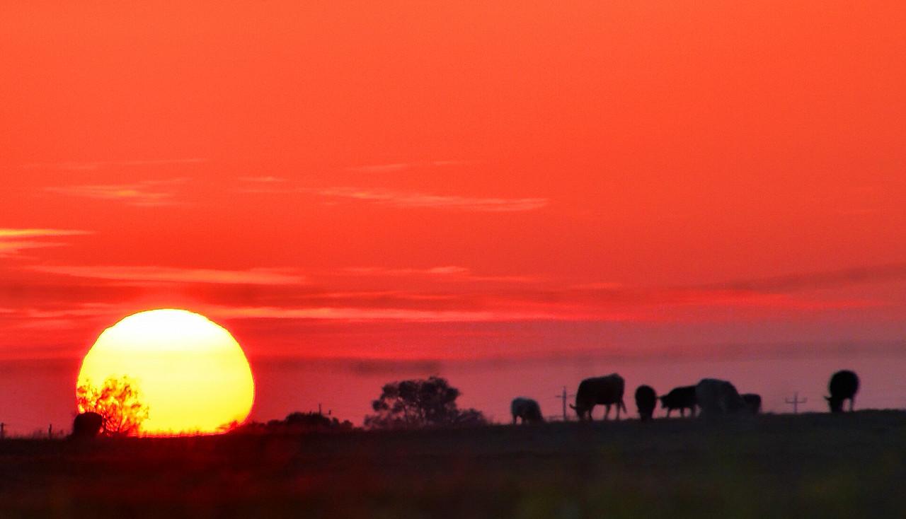 Grazing Sunset