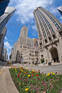 Chicago on Michigan Avenue with Spring Tulips