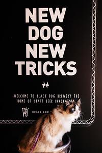 New Dog, New Tricks