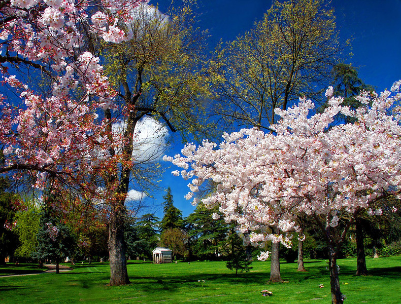 Spring Bloom Blesses the Park at East Lawn's Downtown Cemetery