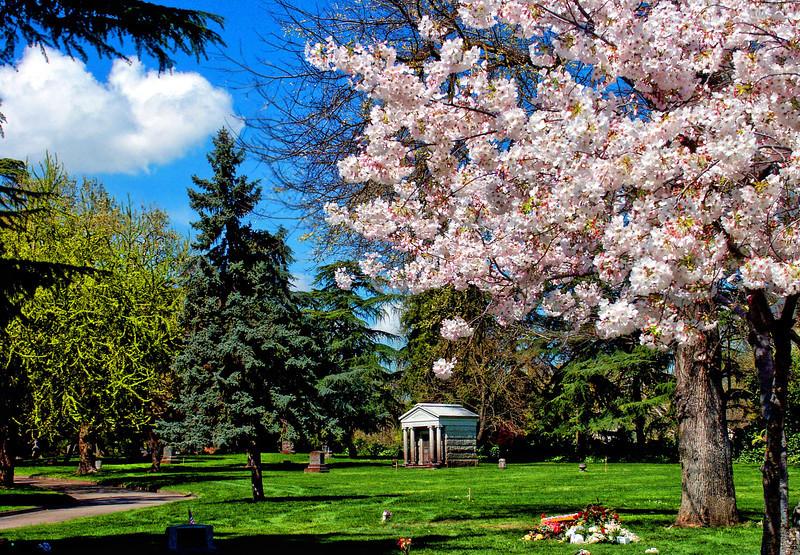 Spring Bloom in Memorium